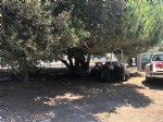 Picture Title - Shade tree tractor repairs